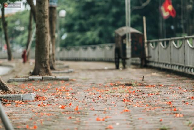 Chùm ảnh: Hà Nội và bản tình ca của những loài hoa mùa hạ thay nhau khoe sắc trên phố - Ảnh 6.