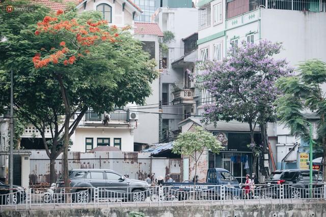 Chùm ảnh: Hà Nội và bản tình ca của những loài hoa mùa hạ thay nhau khoe sắc trên phố - Ảnh 7.
