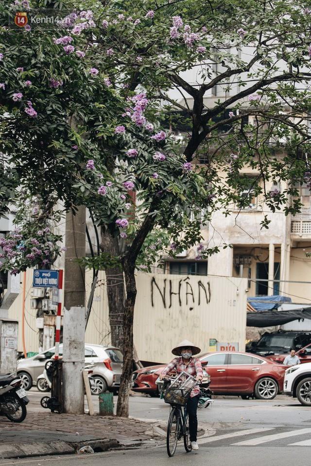 Chùm ảnh: Hà Nội và bản tình ca của những loài hoa mùa hạ thay nhau khoe sắc trên phố - Ảnh 10.