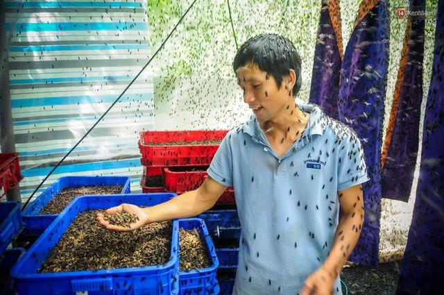 Chàng kỹ sư Sài Gòn bỏ việc về quê nuôi ruồi, doanh thu 80 triệu đồng/tháng: Từng bị gia đình phản đối, bạn bè cười nhạo - Ảnh 3.