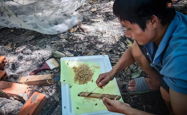 Chàng kỹ sư Sài Gòn bỏ việc về quê nuôi ruồi, doanh thu 80 triệu đồng/tháng: Từng bị gia đình phản đối, bạn bè cười nhạo - Ảnh 5.