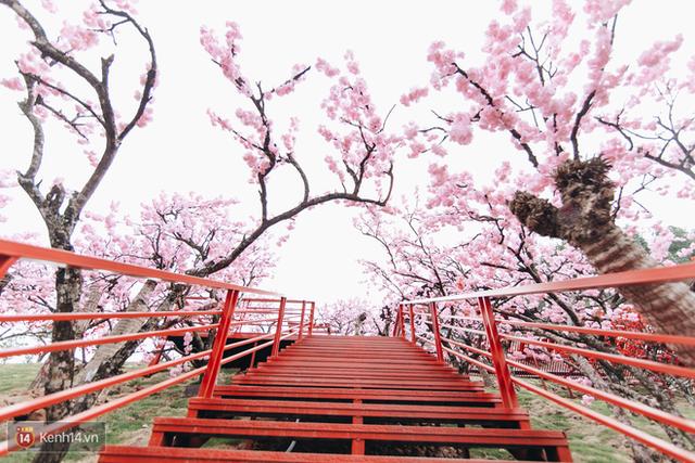 Tranh cãi xoay quanh yếu tố thẩm mỹ của cây cầu 5D đang gây sốt ở Mộc Châu: Khen đẹp thì ít nhưng chê bai sến súa, lạc lõng nhiều vô kể - Ảnh 40.