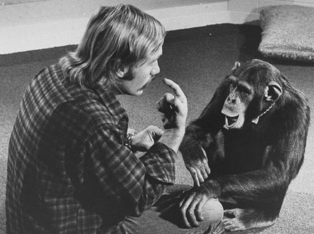 Câu chuyện đau lòng về Lucy, con tinh tinh vẫn tưởng mình là người - Ảnh 2.