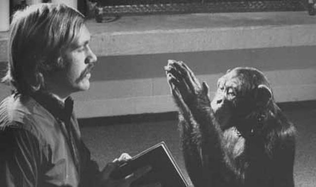 Câu chuyện đau lòng về Lucy, con tinh tinh vẫn tưởng mình là người - Ảnh 3.