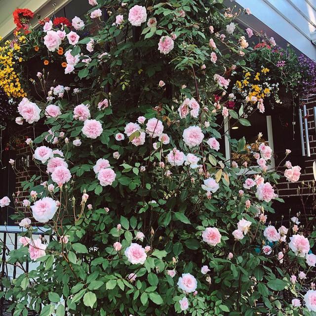 Cuộc sống vô cùng yên bình của cặp vợ chồng cùng 4 con trai bên khu vườn đầy hoa và rau - Ảnh 2.