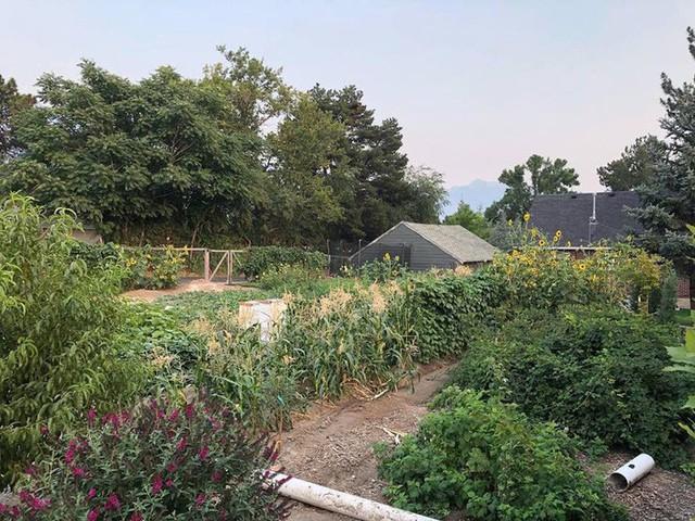 Cuộc sống vô cùng yên bình của cặp vợ chồng cùng 4 con trai bên khu vườn đầy hoa và rau - Ảnh 14.