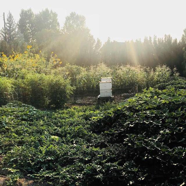 Cuộc sống vô cùng yên bình của cặp vợ chồng cùng 4 con trai bên khu vườn đầy hoa và rau - Ảnh 15.