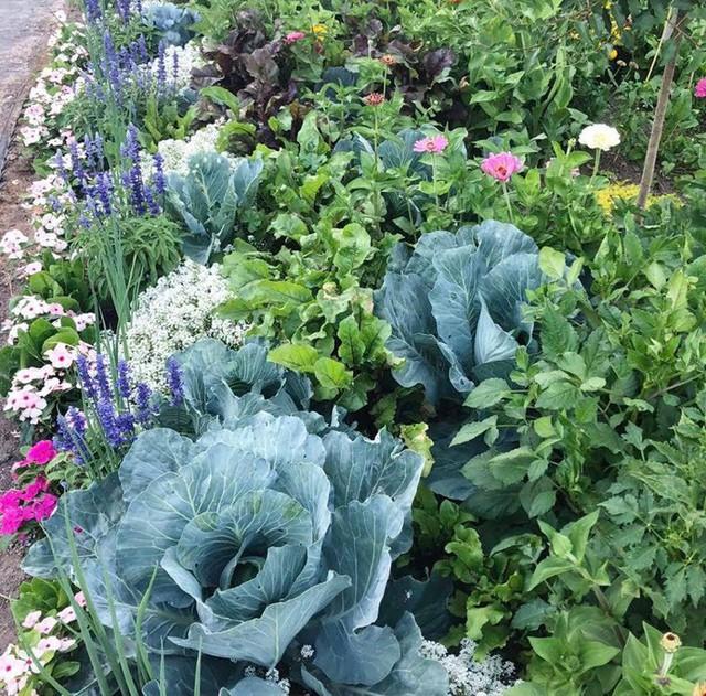 Cuộc sống vô cùng yên bình của cặp vợ chồng cùng 4 con trai bên khu vườn đầy hoa và rau - Ảnh 22.