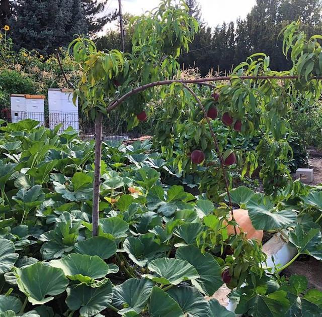 Cuộc sống vô cùng yên bình của cặp vợ chồng cùng 4 con trai bên khu vườn đầy hoa và rau - Ảnh 28.