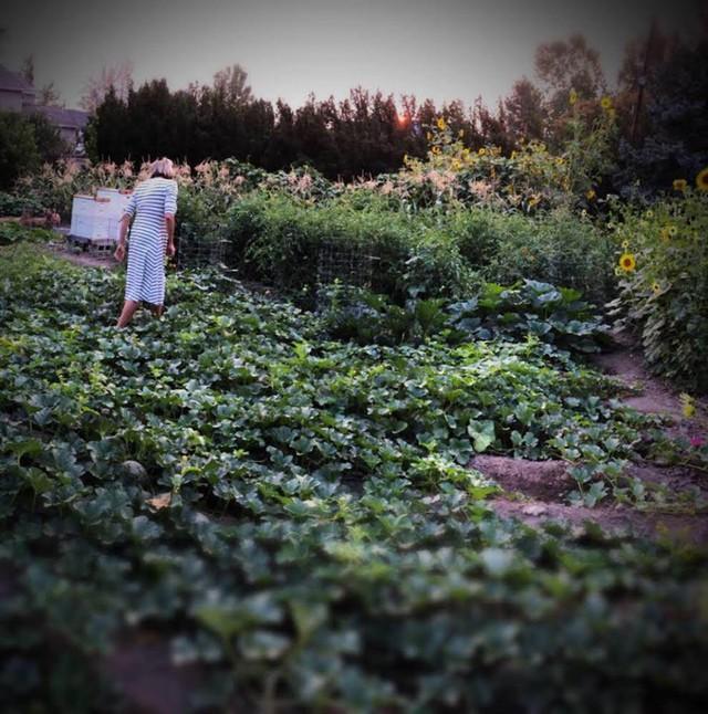 Cuộc sống vô cùng yên bình của cặp vợ chồng cùng 4 con trai bên khu vườn đầy hoa và rau - Ảnh 30.