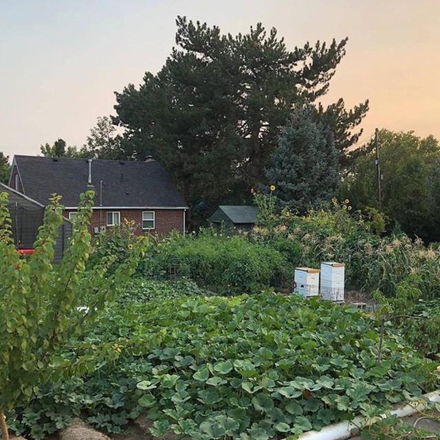 Cuộc sống vô cùng yên bình của cặp vợ chồng cùng 4 con trai bên khu vườn đầy hoa và rau - Ảnh 39.