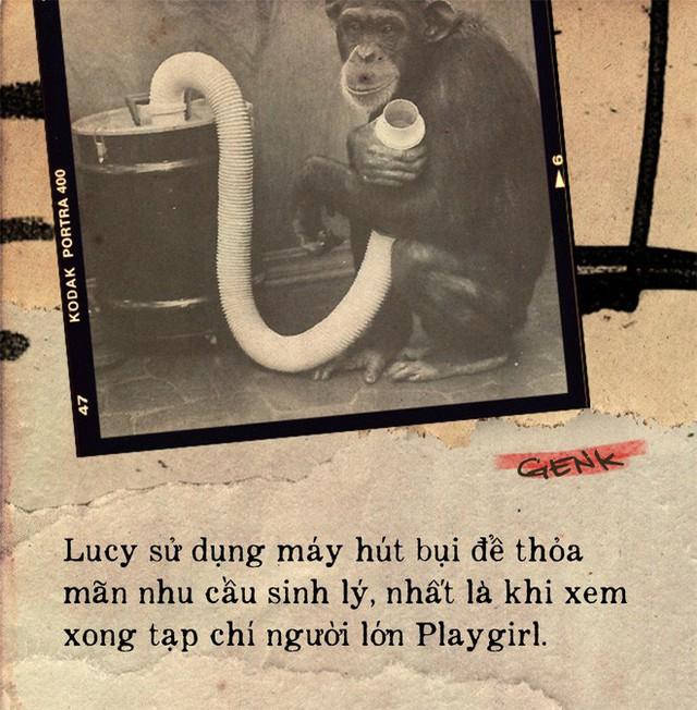Câu chuyện đau lòng về Lucy, con tinh tinh vẫn tưởng mình là người - Ảnh 7.
