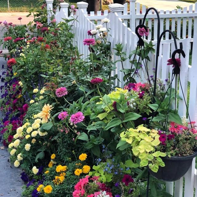 Cuộc sống vô cùng yên bình của cặp vợ chồng cùng 4 con trai bên khu vườn đầy hoa và rau - Ảnh 5.