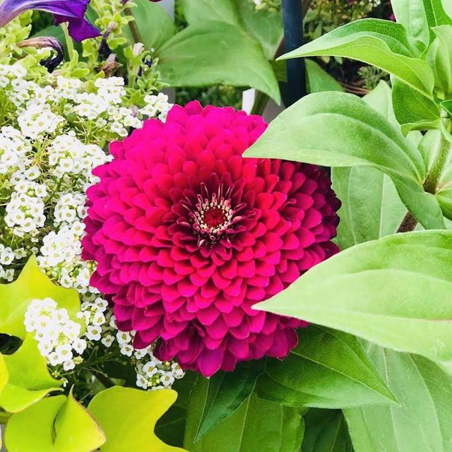 Cuộc sống vô cùng yên bình của cặp vợ chồng cùng 4 con trai bên khu vườn đầy hoa và rau - Ảnh 47.