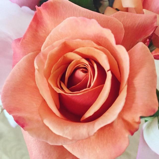 Cuộc sống vô cùng yên bình của cặp vợ chồng cùng 4 con trai bên khu vườn đầy hoa và rau - Ảnh 8.