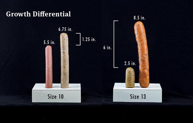 Có phải chân càng to thì cậu nhỏ cũng to? Đây là lời giải cho thắc mắc kinh điển của cánh đàn ông trên thế giới - Ảnh 3.