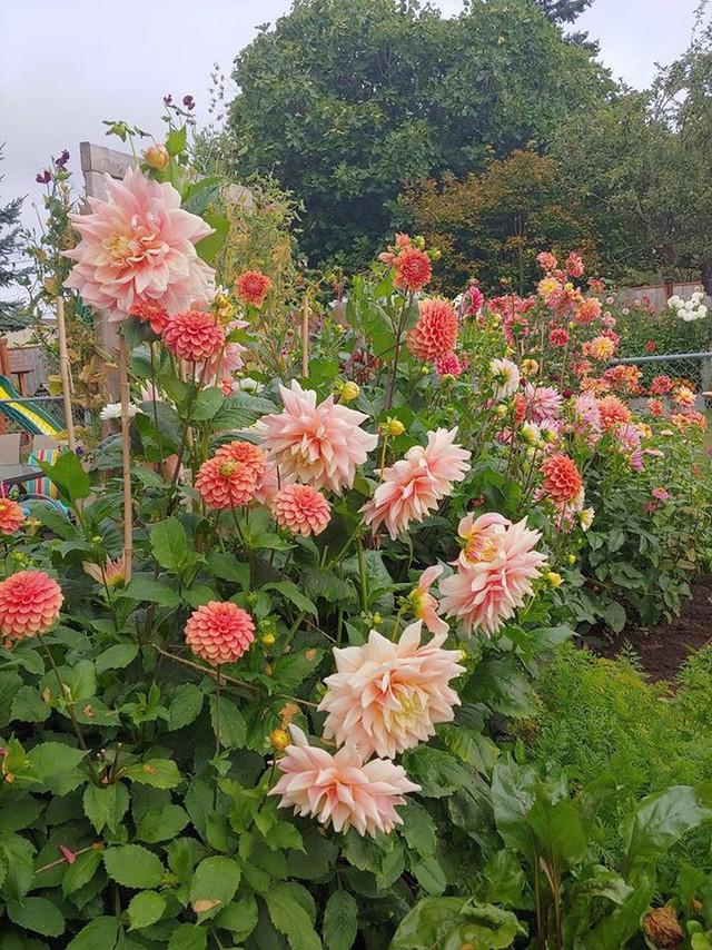 Khu vườn quá đỗi thơ mộng với hoa và rau quả của người mẹ đơn thân cùng cô con gái nhỏ xinh đẹp - Ảnh 14.