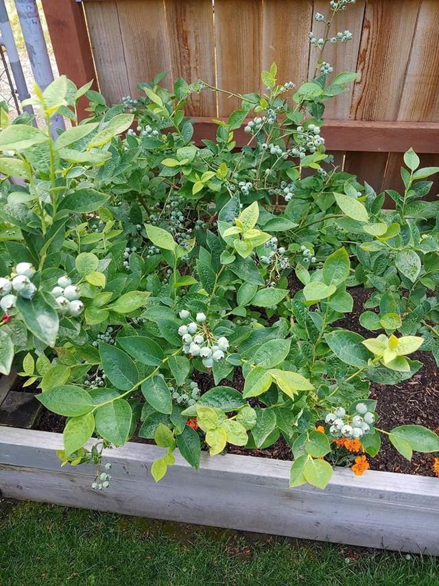 Khu vườn quá đỗi thơ mộng với hoa và rau quả của người mẹ đơn thân cùng cô con gái nhỏ xinh đẹp - Ảnh 16.