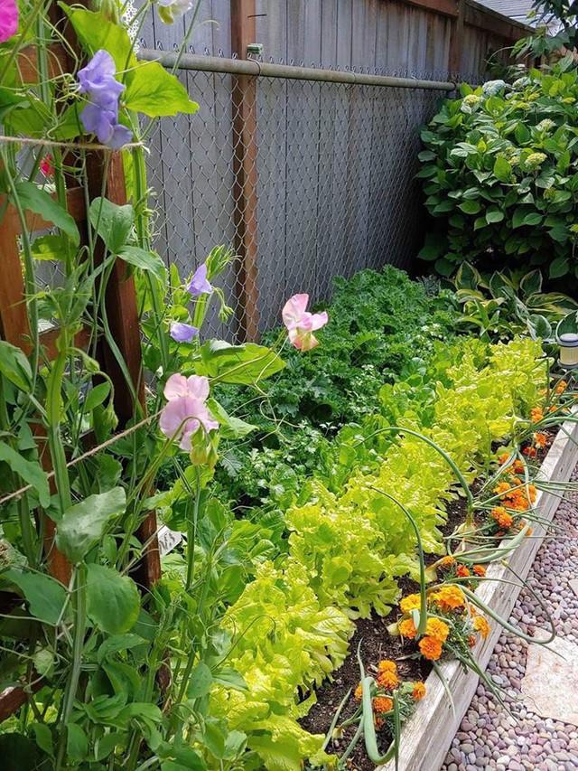 Khu vườn quá đỗi thơ mộng với hoa và rau quả của người mẹ đơn thân cùng cô con gái nhỏ xinh đẹp - Ảnh 21.