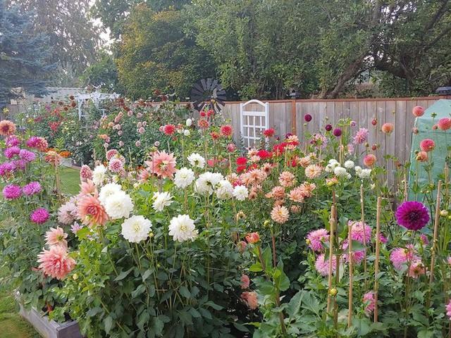 Khu vườn quá đỗi thơ mộng với hoa và rau quả của người mẹ đơn thân cùng cô con gái nhỏ xinh đẹp - Ảnh 24.