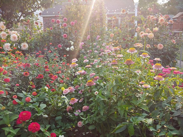 Khu vườn quá đỗi thơ mộng với hoa và rau quả của người mẹ đơn thân cùng cô con gái nhỏ xinh đẹp - Ảnh 30.