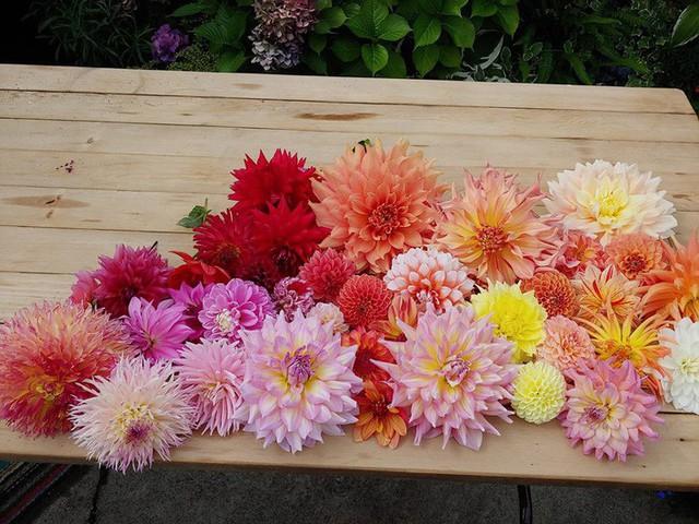 Khu vườn quá đỗi thơ mộng với hoa và rau quả của người mẹ đơn thân cùng cô con gái nhỏ xinh đẹp - Ảnh 33.