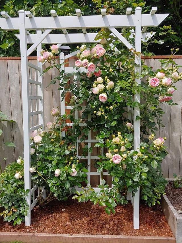 Khu vườn quá đỗi thơ mộng với hoa và rau quả của người mẹ đơn thân cùng cô con gái nhỏ xinh đẹp - Ảnh 8.