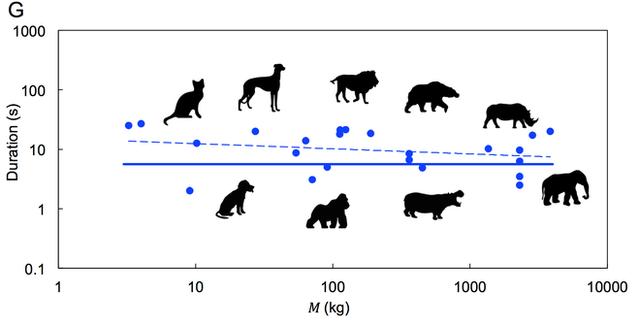 To như voi hay nhỏ như mèo, tất cả động vật đều đại tiện trong 12 giây: Tại sao lại có nghịch lý vậy? - Ảnh 3.