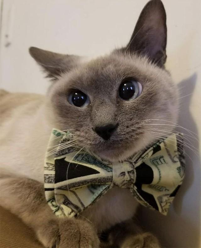 Việc tử tế: CEO tuổi 12 thành lập đế chế may nơ cho chó mèo cơ nhỡ để chúng dễ được nhận nuôi hơn - Ảnh 10.