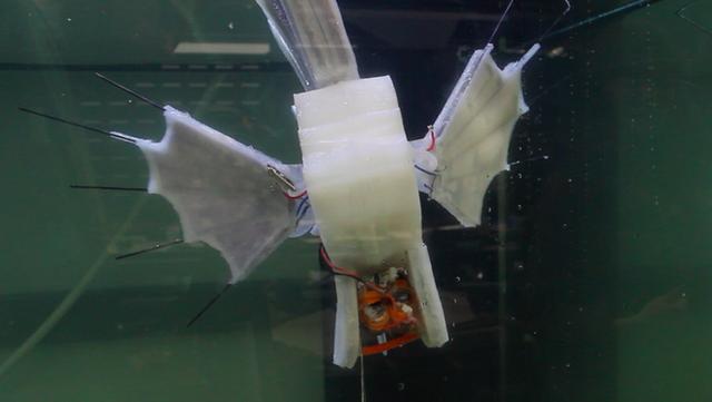 Các nhà khoa học vừa tạo ra robot cá chạy bằng máu - Ảnh 1.