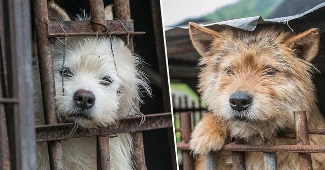 Hàn Quốc đóng cửa một trong những khu chợ thịt chó lớn nhất - Ảnh 1.
