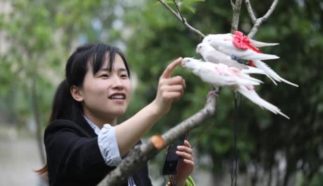 Cô gái 9x kiếm cả trăm triệu hàng tháng nhờ làm bỉm cho chim, xuất khẩu đi cả Mỹ, Canada, Ả Rập - Ảnh 3.