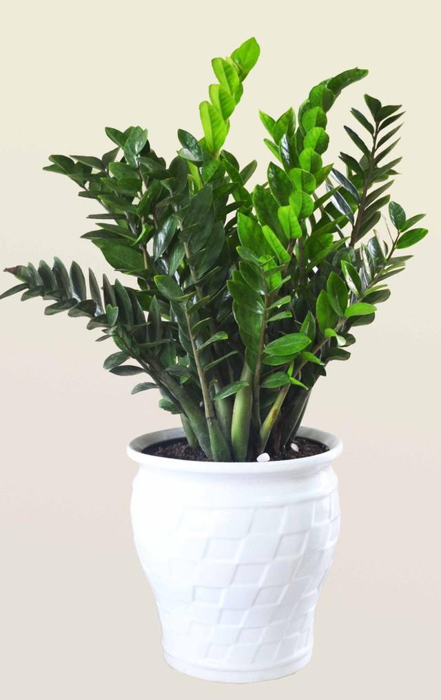 Cẩn trọng khi trồng 10 loại cây cảnh dưới đây, chúng cực độc nếu ăn phải - Ảnh 1.