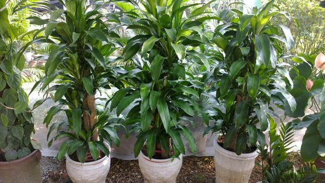 Cẩn trọng khi trồng 10 loại cây cảnh dưới đây, chúng cực độc nếu ăn phải - Ảnh 3.