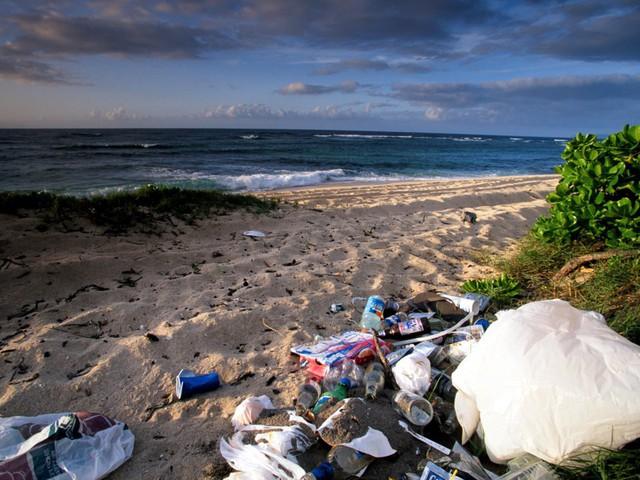 """Du khách """"ngã ngửa"""" toàn tập khi đến """"thiên đường biển"""" Hawaii vì tất cả những hình ảnh hiền hoà, thư giãn từng thấy trên mạng giờ chỉ còn là mộng tưởng - Ảnh 10."""