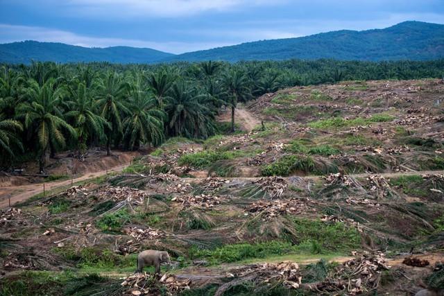 Bức tranh toàn cảnh về sự hủy diệt của con người đối với thiên nhiên và lời cảnh báo cho nhân loại về tương lai bị diệt vong - Ảnh 2.