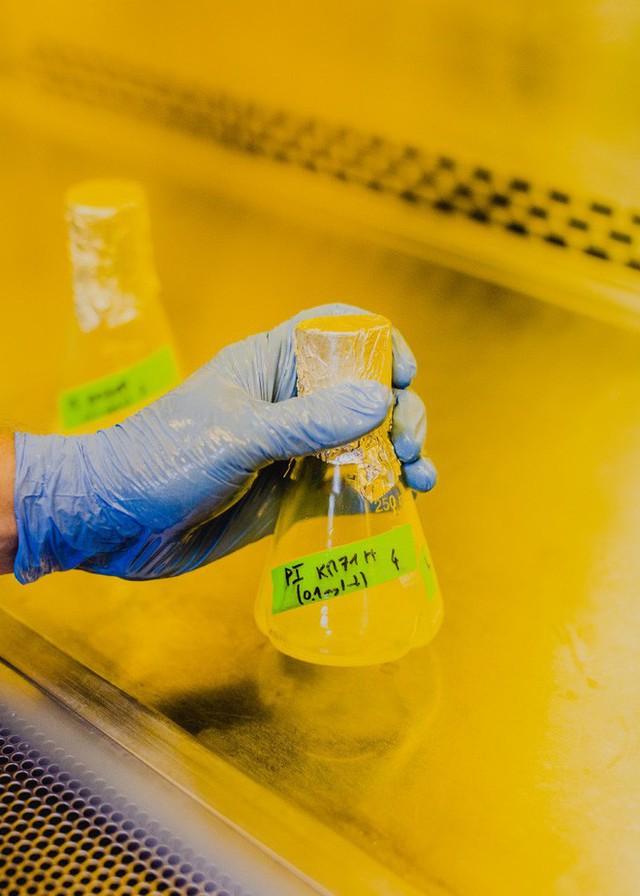 Những bio-hacker Mỹ muốn giúp bệnh nhân tiểu đường tự sản xuất insulin tại nhà - Ảnh 9.