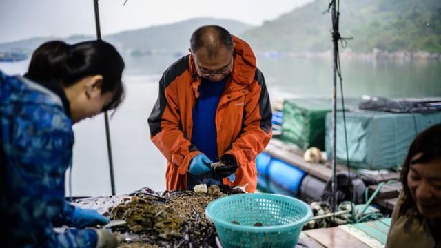 Tham vọng hồi sinh ngành nuôi cấy ngọc trai Hong Kong của nhà khoa học 58 tuổi - Ảnh 1.