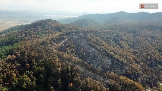 Clip nhìn từ trên cao: Cánh rừng thông xám xịt ở Hà Tĩnh sau 4 ngày lửa bùng cháy kinh hoàng khiến nhiều người xót xa - Ảnh 3.