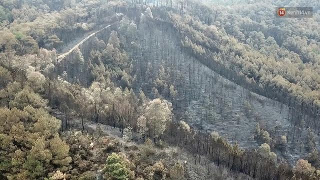 Clip nhìn từ trên cao: Cánh rừng thông xám xịt ở Hà Tĩnh sau 4 ngày lửa bùng cháy kinh hoàng khiến nhiều người xót xa - Ảnh 4.