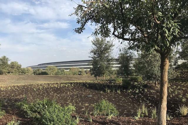 Trụ sở phi thuyền Apple Park có gì đặc biệt và Apple đã mất bao nhiêu tiền để xây dựng tòa nhà này? - Ảnh 2.