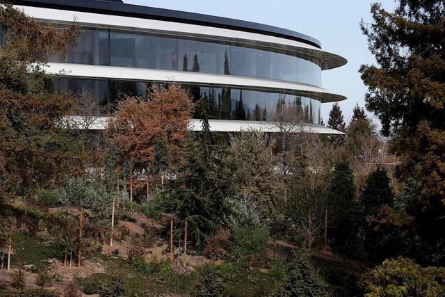 Trụ sở phi thuyền Apple Park có gì đặc biệt và Apple đã mất bao nhiêu tiền để xây dựng tòa nhà này? - Ảnh 3.