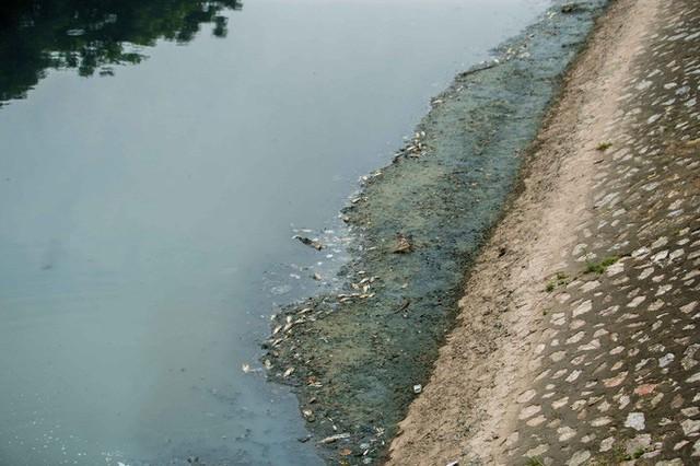 Sau khi xả nước hồ Tây vào sông Tô Lịch, thấy cá chết hàng loạt - Ảnh 3.