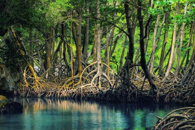 siargao - photo 20 15634220276661098836334 - Vượt qua cả Bali và Hawaii, ốc đảo hình giọt nước kỳ lạ ở Philippines được tạp chí Mỹ bình chọn đẹp nhất thế giới