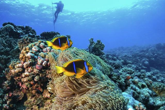 siargao - photo 21 15634220276681330345660 - Vượt qua cả Bali và Hawaii, ốc đảo hình giọt nước kỳ lạ ở Philippines được tạp chí Mỹ bình chọn đẹp nhất thế giới