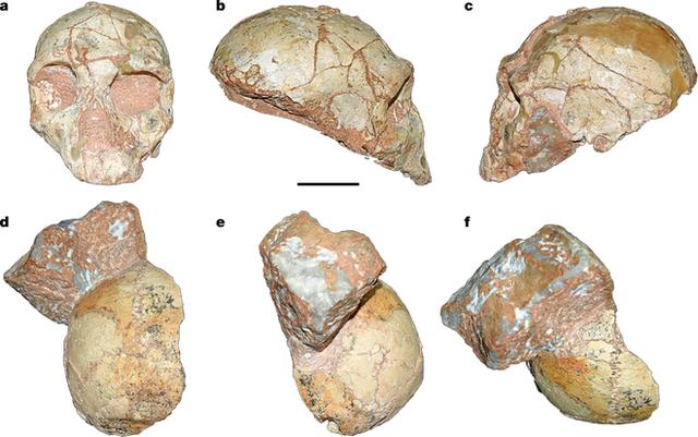 Phát hiện hóa thạch của nhóm người tiền sử đầu tiên rời khỏi Châu Phi - Ảnh 1.
