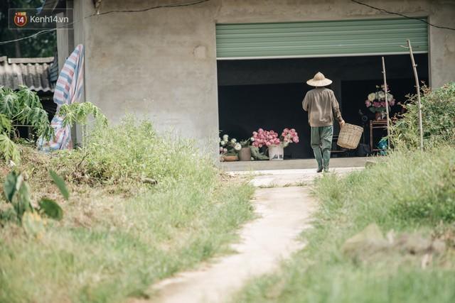 Cử nhân báo chí khởi nghiệp trà sen với 20 triệu mẹ dành mua xe máy: Con không thích đi làm, con muốn về nhà - Ảnh 26.