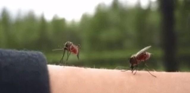 Ai cũng mừng khi biết khoa học Trung Quốc suýt hủy diệt được toàn bộ muỗi nguy hiểm trên 2 hòn đảo, nhưng đã có một điều đáng tiếc xảy ra - Ảnh 1.