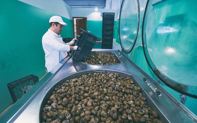Ngành công nghiệp mỹ phẩm từ ốc sên: Trị giá trăm triệu USD, chất nhờn còn quý hơn vàng, nông dân hưởng lợi lớn - Ảnh 3.