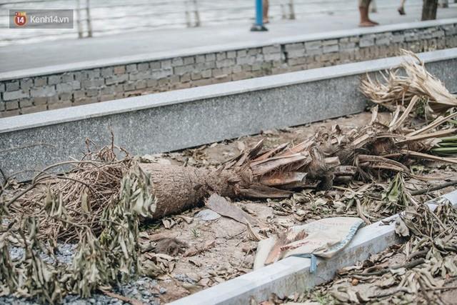 """Cận cảnh cuộc di cư của gần trăm cây hoa sữa từ hồ Tây ra bãi rác Nam Sơn để """"khử mùi"""" - Ảnh 14."""